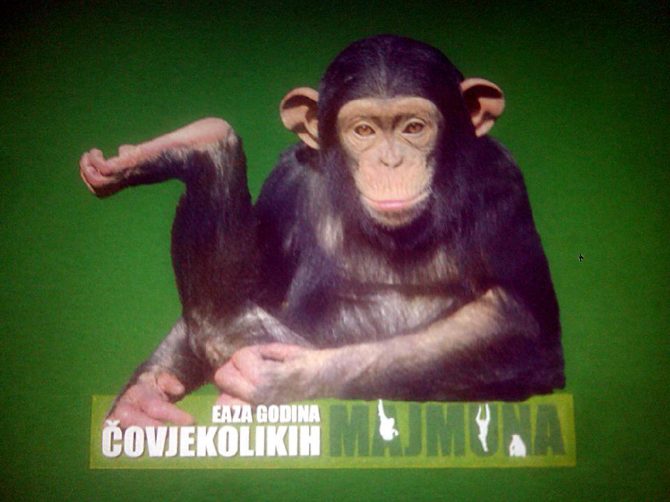 Godina čovjekolikih majmuna zelena pamučna majica