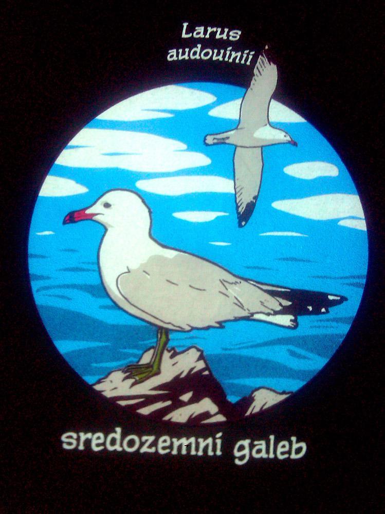 Sredozemni galeb - full color tisak na crnoj majici